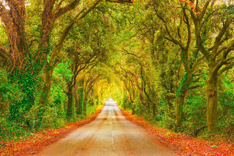 Fall Road Trip Ideas